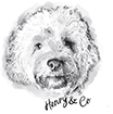 cockapoo drawing of henry
